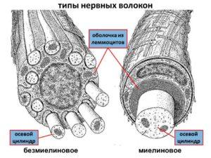narusheniya-v-nervnyh-voloknah-pri-porfirii